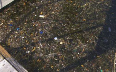 ضایعات خطرناک در آب دریاچه انتاریو