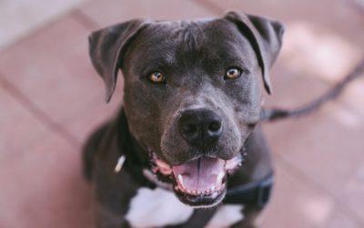 سگی در آلبرتا صاحب خود را کُشت