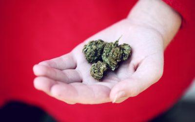 قانونی شدن مصرف ماریجوانا در کانادا و نگرانیها و سردرگمیها